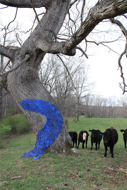 Photograph of tree painted with a casein paint slurry of buttermilk and ultramarine blue pigment on Brush Mountain in Blacksburg, Virginia, location of the proposed New Market pipeline. Photo: Robin Boucher, 2016