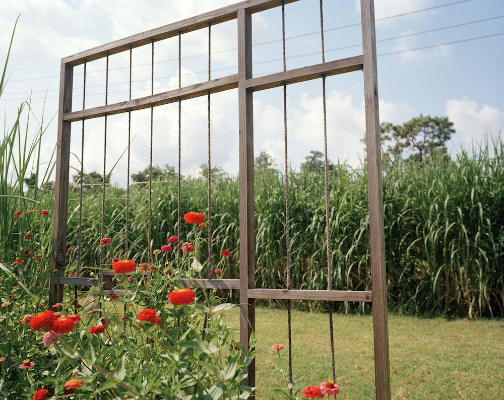 Solitary Gardens in New Orleans' Lower Ninth Ward, Photo: Olivia Hunter