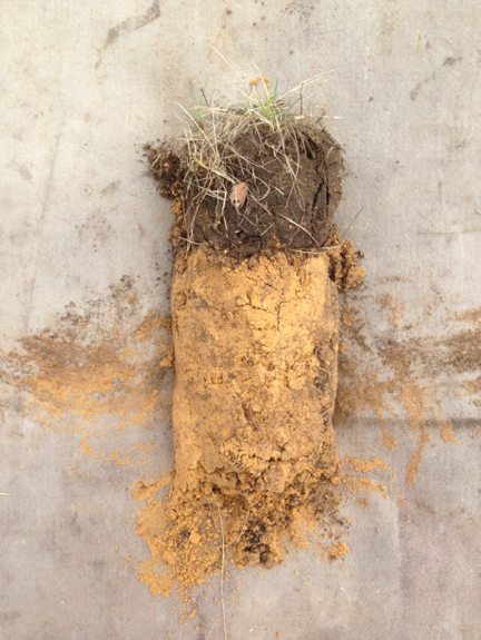 Soil sample from the Emerson area Gary showing typical topsoil on lake plain soils, excellent for fruit growing. Image: Frances Whitehead