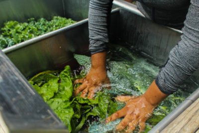 Washing greens, Our Mothers' Kitchens Camp, 2017. Photo: Gabrielle Clark.