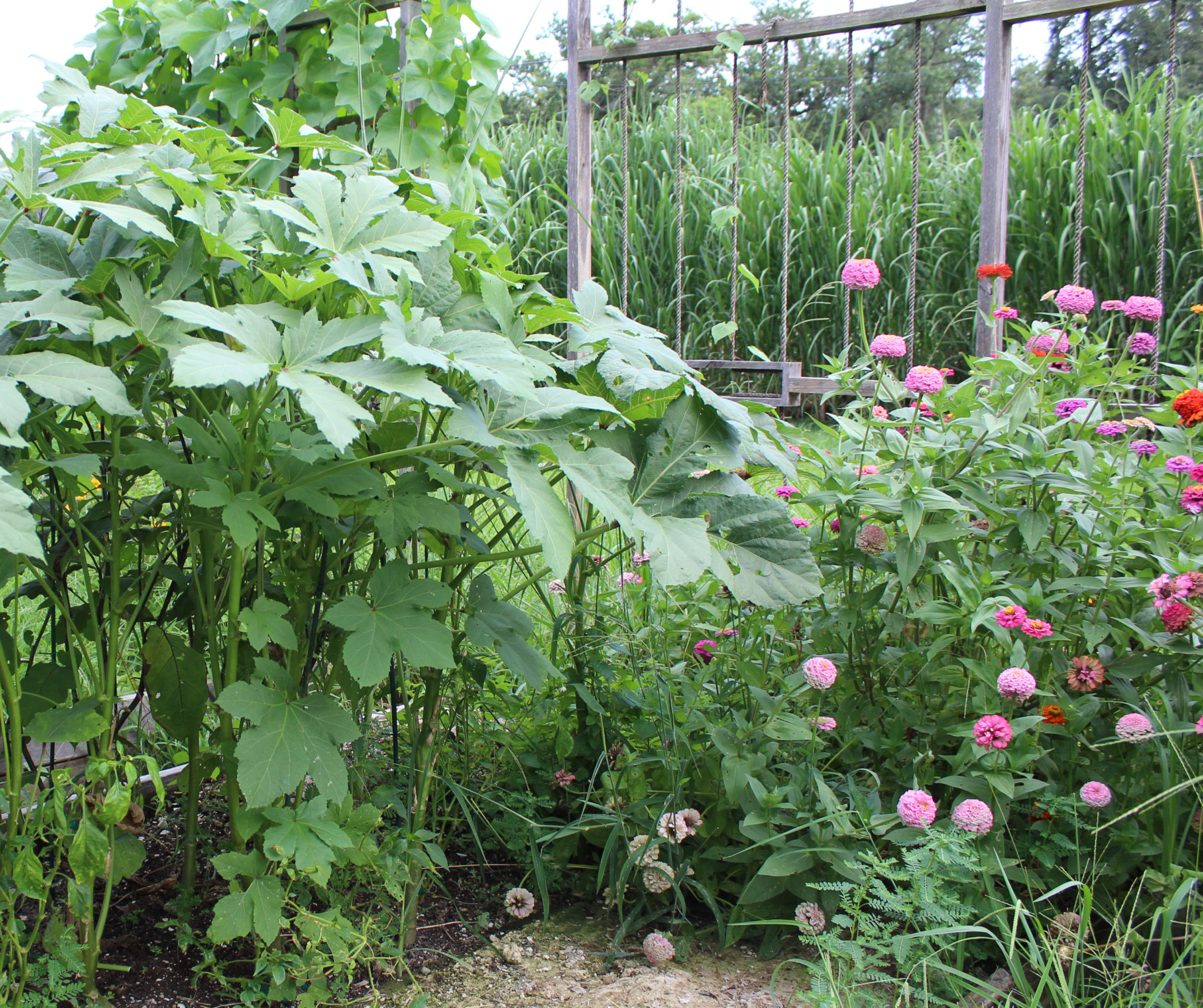 """Jesse Wilson's garden in the Lower Ninth Ward, New Orleans. Photo courtesy of the """"Solitary Gardens"""" team."""
